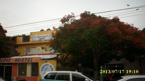 Graffiti Playa Hostel: graffiti hostel playa
