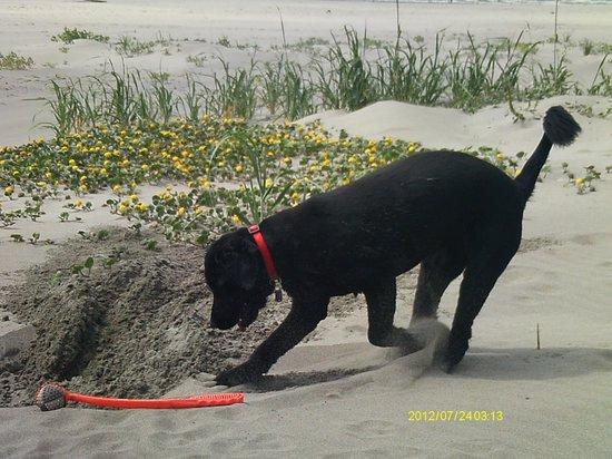Lighthouse Oceanfront Resort: Dog friendly memories