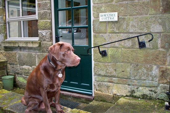 Eastgate Cottages : Our dog Cadbury at Rowntree Cottage