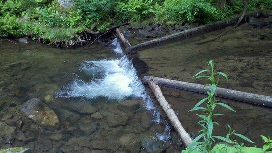 Laurel Hill State Park : creek