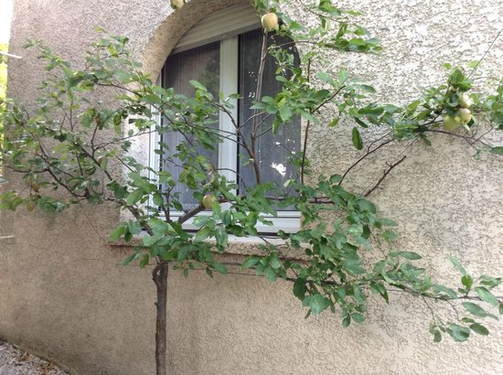 Hotel Ulysse Montpellier Centre: The apple tree we gazed at over our coffee and croissants