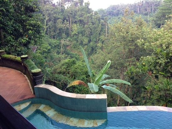 Villa Awang Awang: Forest view from the dinning area