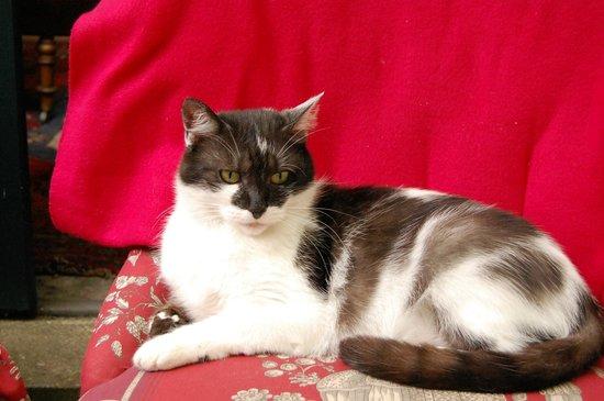 Le Thé dans la Vigne : De eigenzinnige kat
