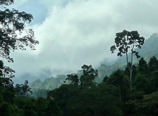 Bokor National Park : le parc dans les nuages