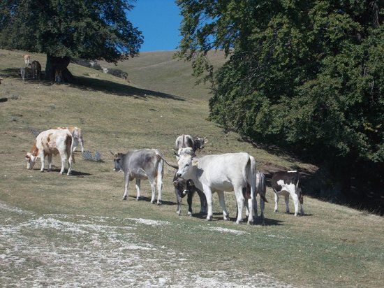 Lu Ceppe Agriturismo: ANIMALI