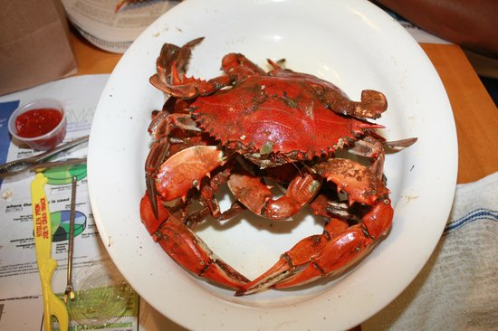 Brooklyn Park, MD: A Jumbo cooked Blue Crab from the Crab Depot in Maryland