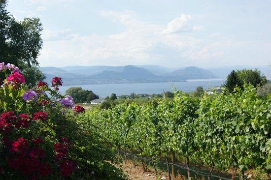 La Frenz Winery: Nice view