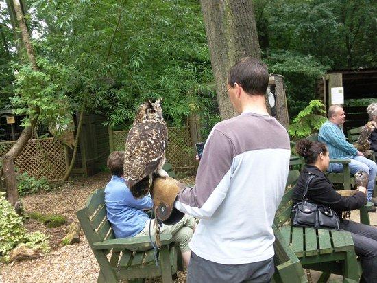 The Rutland Falconry and Owl Centre: Has everyone got their Bird