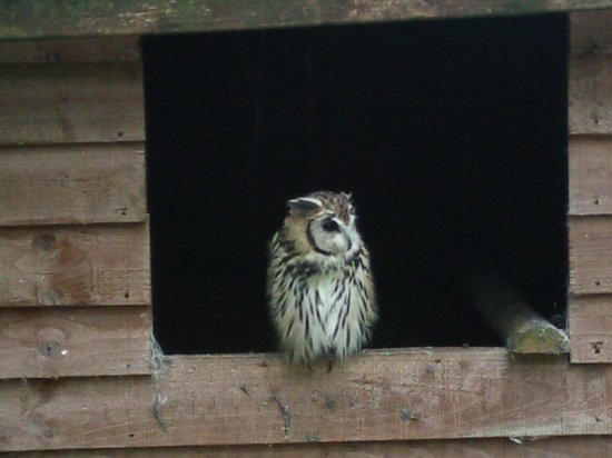 The Rutland Falconry and Owl Centre: Awww! No one picked me!