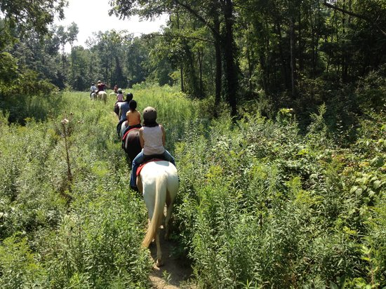 Painted Bar Stables : On the trail in the woods