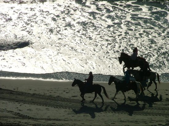 Holiday Sands North: Horses on the beach 9th floor view