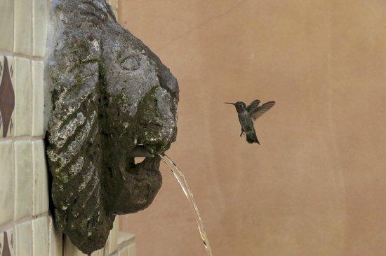 Royal Palms Resort and Spa: Hummingbirds visit Private patio #2