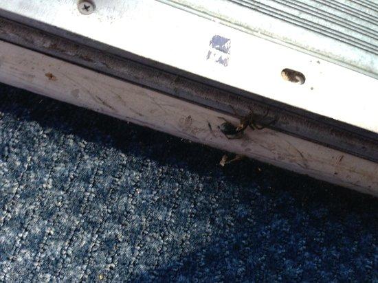 Motel 6 Albany Airport : Huge dead bug in doorway