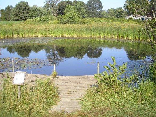 Pond Picture Of Gilsland Farm Audubon Center Falmouth Tripadvisor