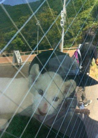 Izu Animal Kingdom : ホワイトタイガーの子供