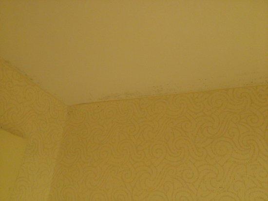 Hampton Inn & Suites Williamsburg Historic District: Black mold