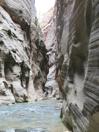 Zion Outfitter : Hiking the Narrows