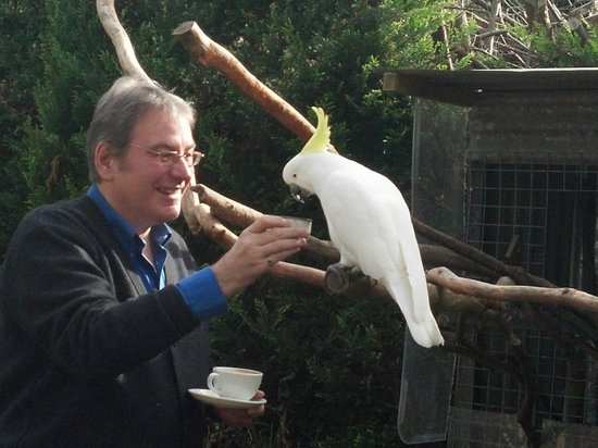 Codrington Gardens: Cockie the Guest Liaison Officer