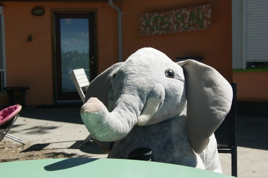 Elephant Island Orchard Wines: Elephant joined us for a drink :)