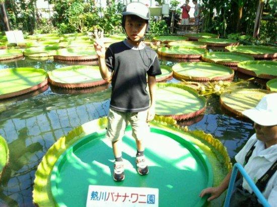 Atagawa Tropical & Alligator Garden : 体重40Kgまでです!
