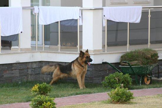 Deska Legend Apartments: Guard resort