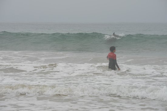 Sandbar Surf School: Learn to surf with the dolphins playing next to you!