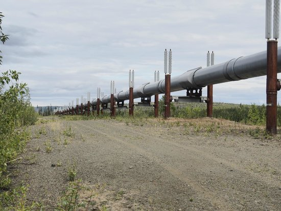 Northern Alaska Tour Company: We were able to get out and stand under the pipeline.