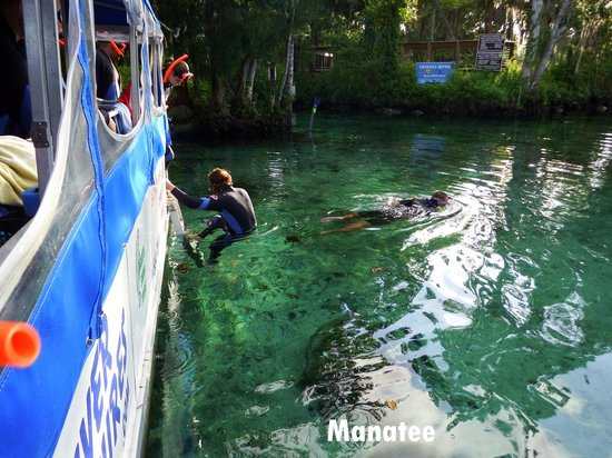 Crystal River National Wildlife Refuge: This was our second dive into the canal to interact with the manatee
