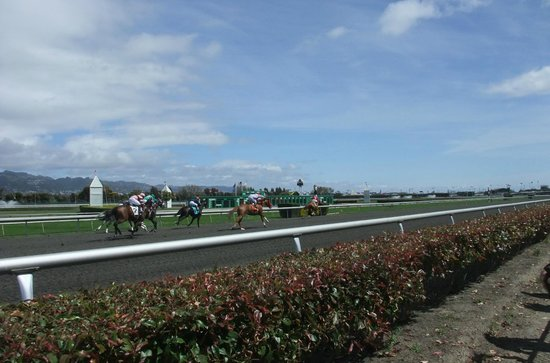 Golden Gate Fields: Horse racing from ground level
