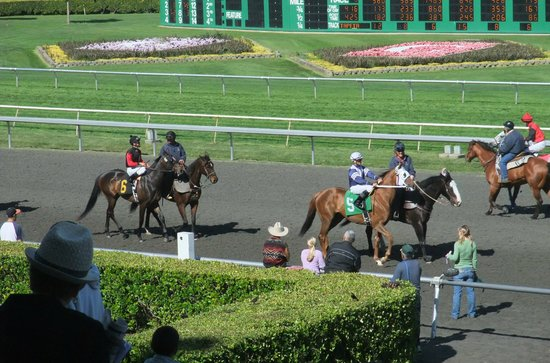 Golden Gate Fields: Showing the horses