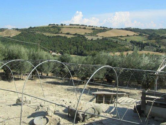 Agriturismo il Rosciolo: panorama
