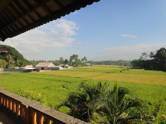 Mandala Desa: Nice views from the View suite