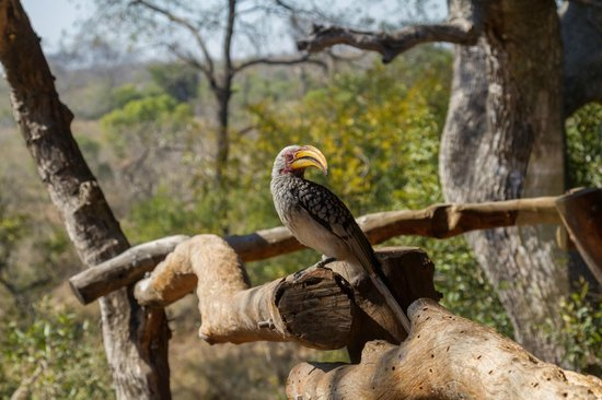 Idube Private Game Reserve Lodge: A room with a view