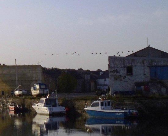 Hayle Towans Beach: Geese