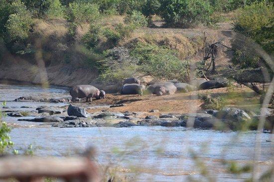 Neptune Mara Rianta Luxury Camp: Vista del fiume