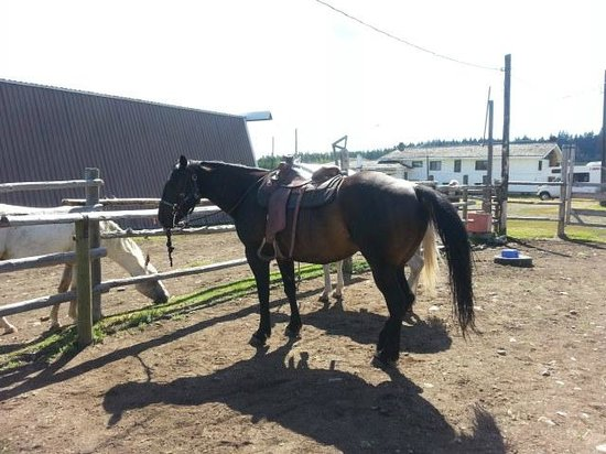 """Red Willow Guest Ranch: The wonderful """"Boy"""" I rode for the day"""