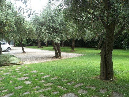Giardino di ulivi foto di villa a case rosse seravezza - Giardino con ulivi ...