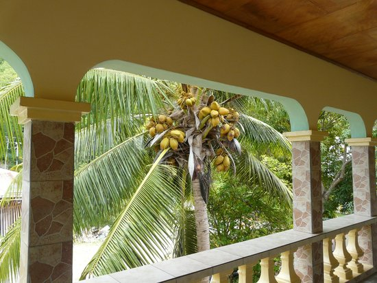 Villa Bananier: vue de la terrasse