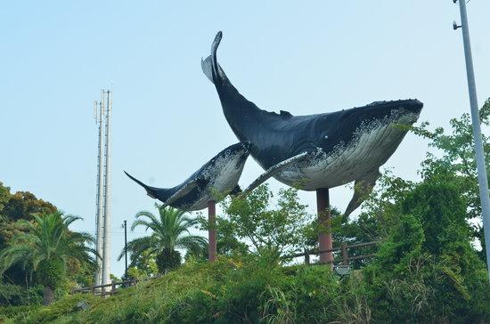 Taiji Whale Museum: 2013.08.14