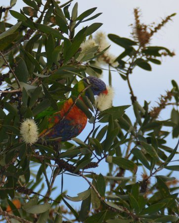 North Coast Holiday Parks Ferry Reserve : Some of the locals