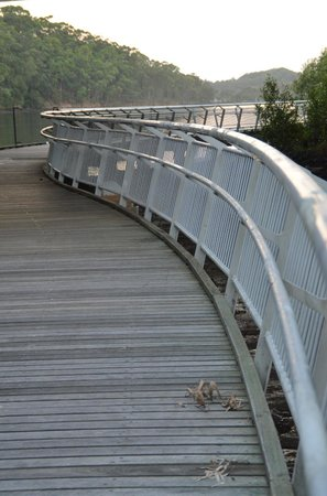 North Coast Holiday Parks Ferry Reserve : Take a walk under the bridge!