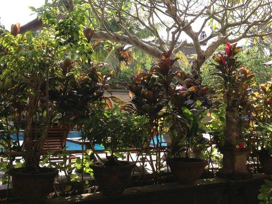 Sagittarius Inn: giardino
