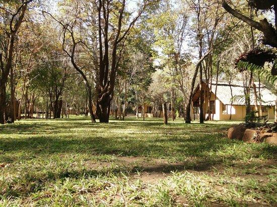 Bushfront Lodge: Bushfront area