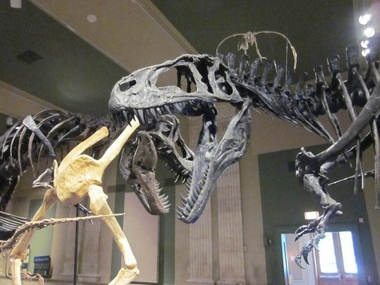 Dinosaur Discovery Museum
