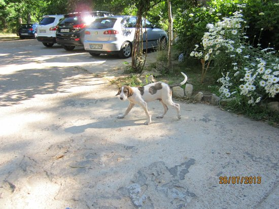 Las Batuecas: The puppies used to greet us, they were so playful!
