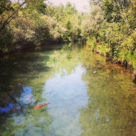Parco Ittico Paradiso : carpe koi