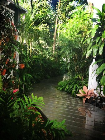 The Mermaid & The Alligator : In the oasis area of the B&B