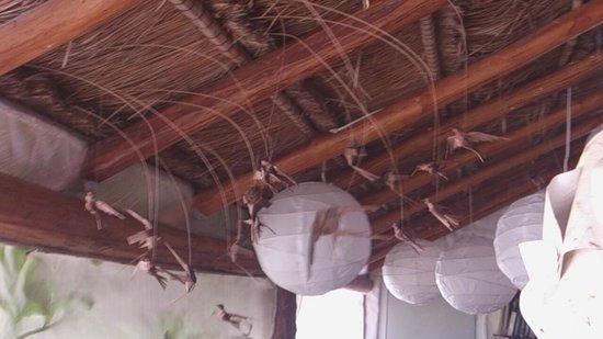 Casa BlatHa : Aves, peces, grillos!