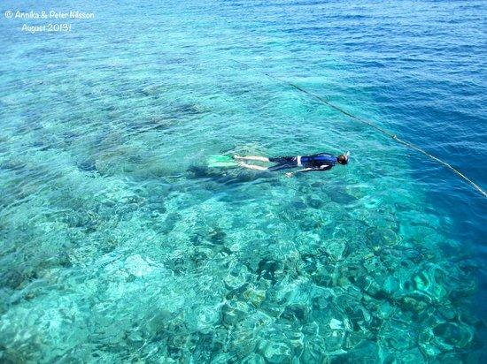 Vakarufalhi Island Resort: Snorkelling on Vakaru housereef