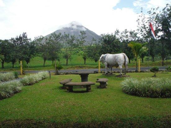 El Novillo del Arenal: Volcano view